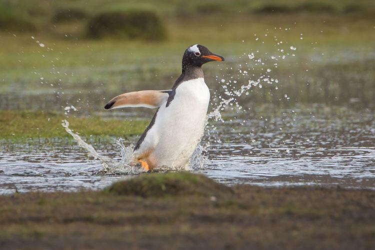 Bird in a water