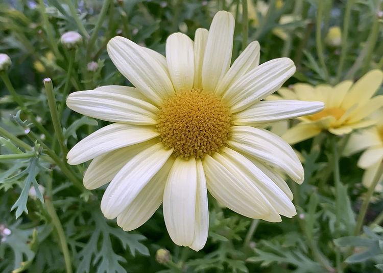 Sunshine White