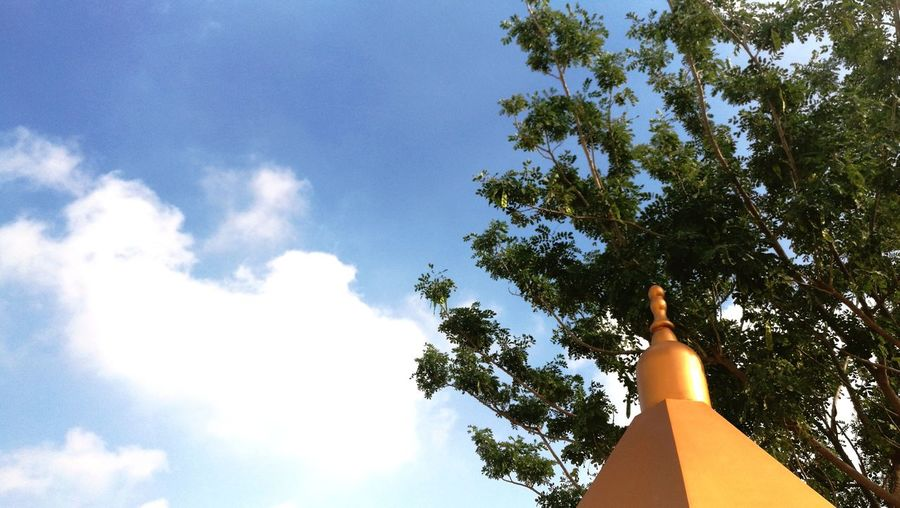 Golden Mosque Sky Tree Low Angle View Cloud - Sky Nature Day Outdoors Close-up Beauty In Nature No People