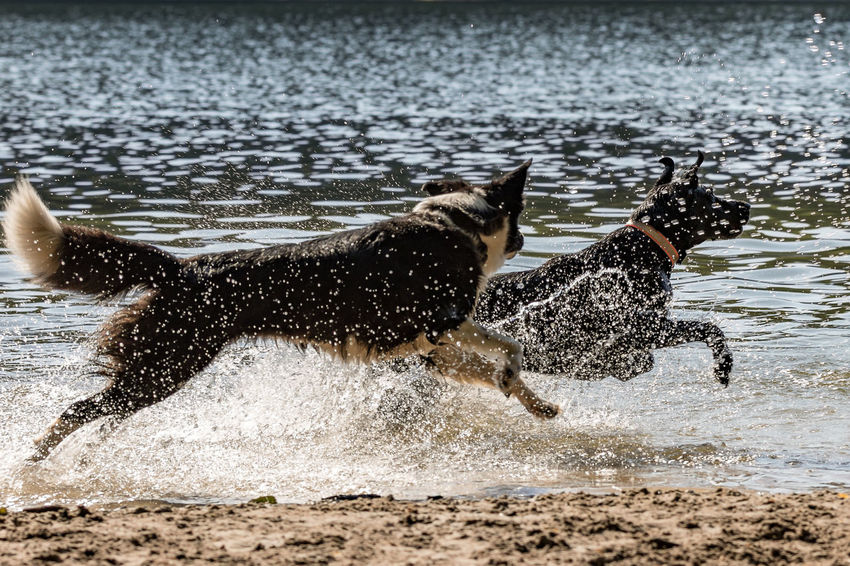 Animal Animal Themes Animal Wildlife Animals In The Wild Beach For Dogs Beachlife Day Focus On Foreground Group Of Animals Mammal Motion Nature No People Sea Side View Splashing Vertebrate Water Waterfront