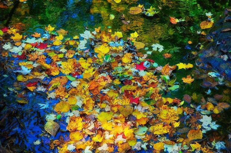 Creek Full of Leaves. Autumn Autumn Colors Autumn Leaves Leaves Multi Colored No People Outdoors Season