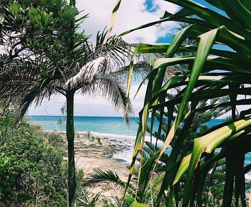 Sea Water Beach Leaf Palm Tree Nature Environmental Conservation No People Tree Outdoors Horizon Over Water Sky Beauty In Nature Day Caloundra Palm Palm Trees Palm Leaf Summer Australian Landscape Australia