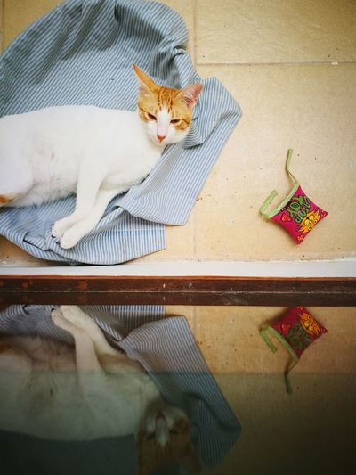sleeping cat Sleeping Cat Reflection Mirror Cute Pets Pets Domestic Cat Hanging Coathanger Feline Cat Ginger Cat Yellow Eyes Home