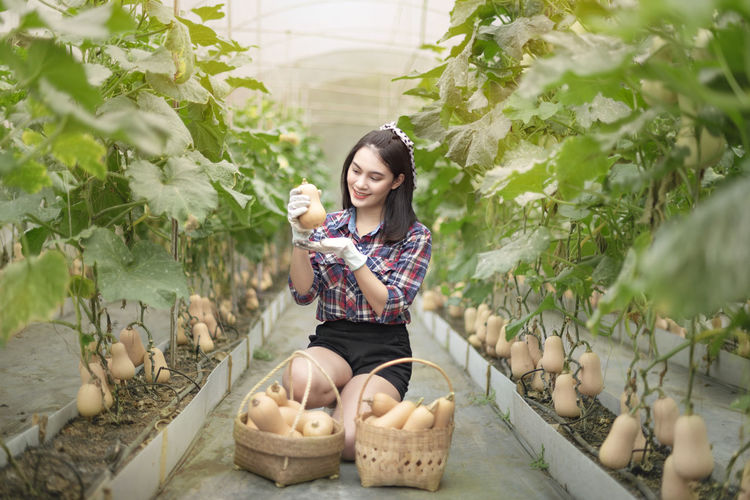 Young woman picking squashes in farm