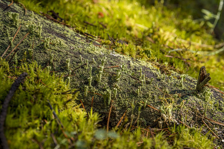 Close-up of moss on field