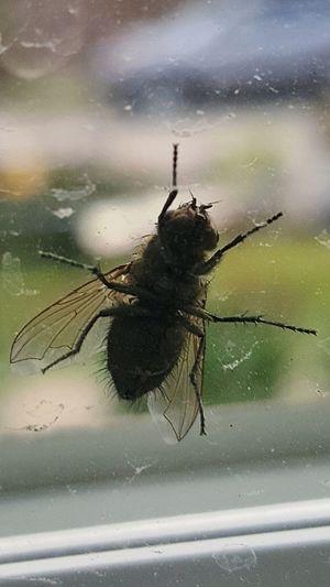 Fly Window