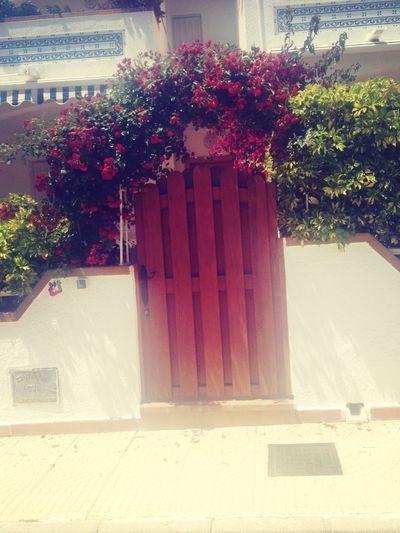 SPAIN Flowers Gate