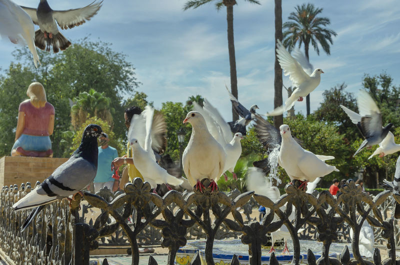 Flock of birds perching on ground