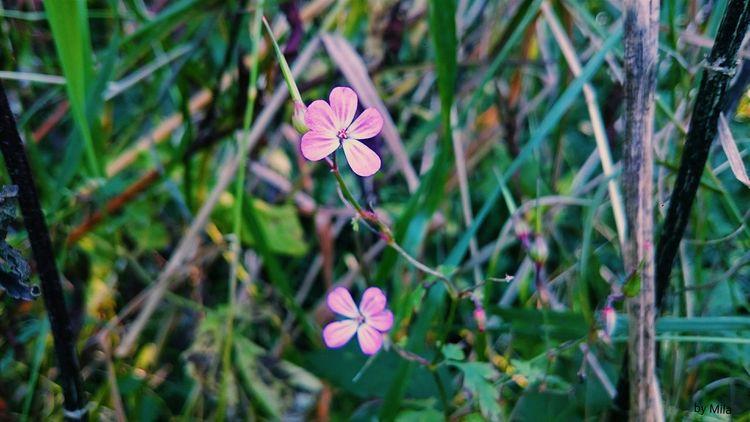 Nature Flowercloseup First Eyeem Photo