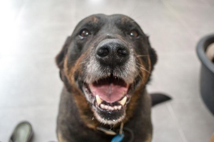 Happy Budda Animal Animal Themes Close-up Dog Dog Portrait Dog Smile Dog Smiling Dogs Dogs Of EyeEm Domestic Animals Happy Animal Looking At Camera One Animal Pet Pet Photography  Pets
