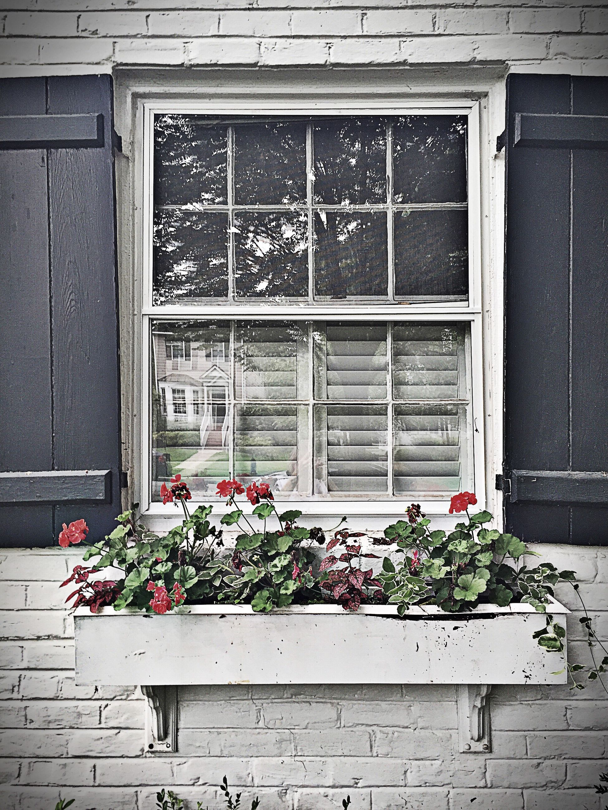 building exterior, architecture, flower, built structure, potted plant, plant, window, growth, house, flower pot, brick wall, closed, wall - building feature, door, day, ivy, wall, freshness, leaf, outdoors