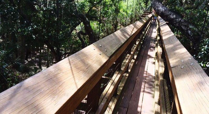 Sarasota Florida Canopy Walk