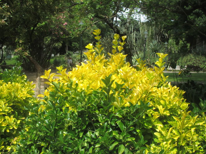 Paint The Town Yellow Beauty In Nature Blooming Day Flower Fragility Freshness Growth Nature No People Outdoors Plant Tree Yellow