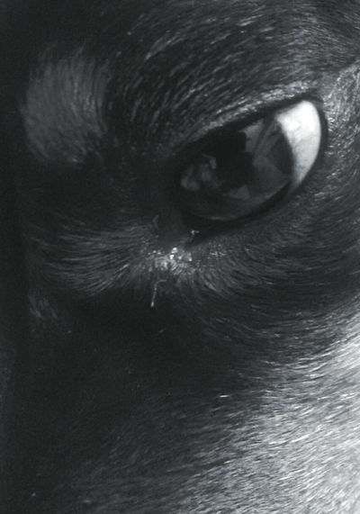 There is a feeling in his eyes, I see it crystal clear. His soul reflects within, his wet broken tear. I love my dog. I Love My Dog Pet And Owner Eyes Eyes Are Soul Reflection EyeEm Best Shots - Black + White Eye4photography  EyeEm Gallery EyeEm Best Edits EyeEm Best Shots Eyemphotography EyeEm Macro From My Point Of View Our Best Pics Taking Photos Tadaa Community Blackandwhite Black And White Black And White Photography Black & White Showcase March Pet Photography  Emotions Pet Love Pure Heart True Love