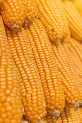 Corn Food And Drink Food Corn On The Cob Vegetable Yellow Healthy Eating Sweetcorn Wellbeing Close-up No People Corn - Crop Freshness Raw Food Cereal Plant Agriculture Crop  Full Frame Day Backgrounds Vegetarian Food