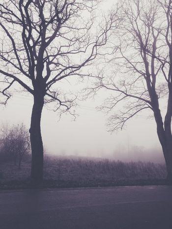 Autumn so not ☔ Nature