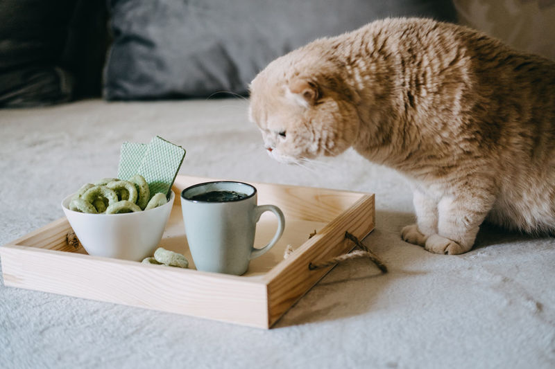 Cat lying on table