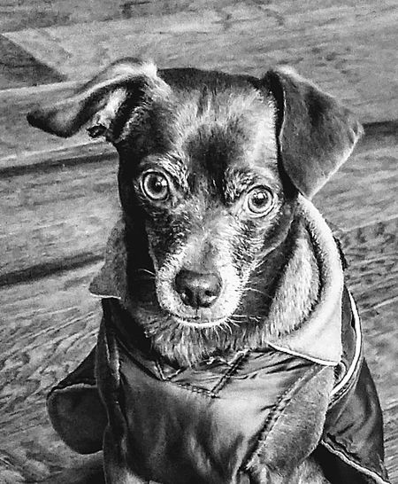 ...this is serious!!! Seriousface Pets Portrait Dog Looking At Camera Close-up Pet Clothing