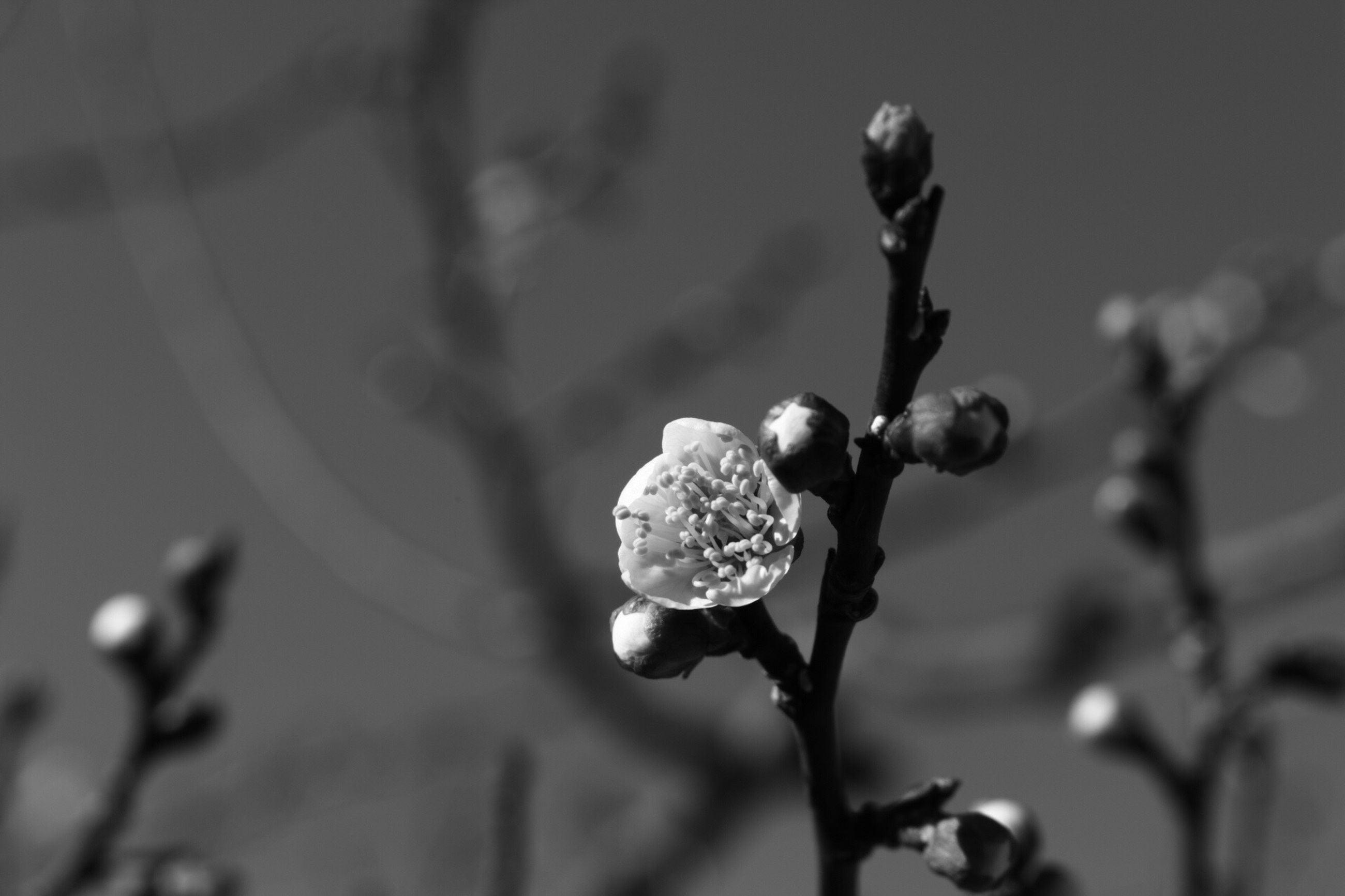 focus on foreground, close-up, winter, branch, cold temperature, growth, frozen, nature, snow, season, freshness, twig, fragility, plant, beauty in nature, weather, tree, selective focus, stem, bud