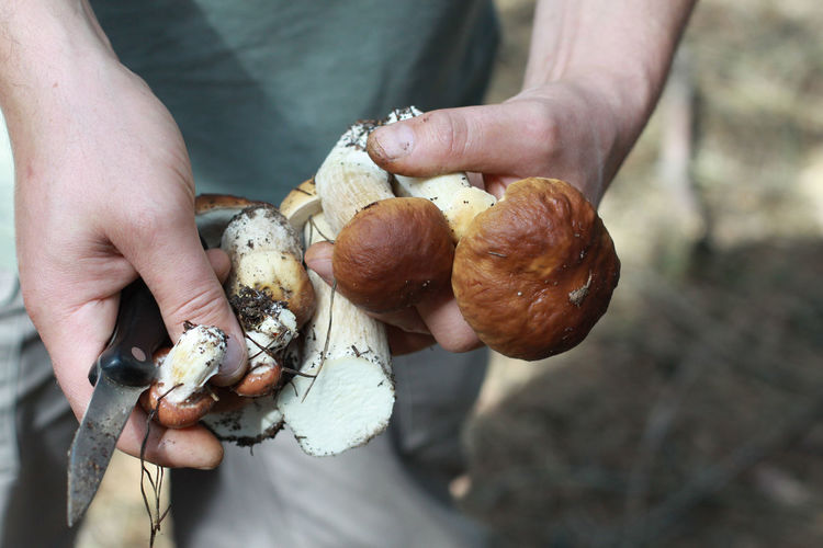 Close-Up Of Man Holding Mushroom