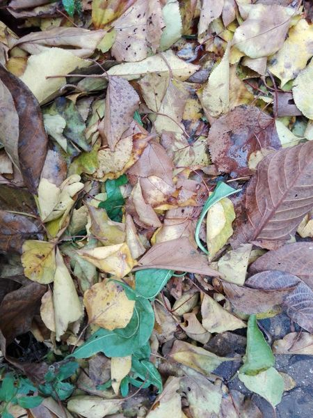 Colorful Leaves Selected For Premium WOLFZUACHiV PREMiUM Ionita Veronica Photography Fall Fallen Leaves Fallen Leaves Toamna Frunze Wolfzuachiv Ionita Veronica Veronica Ionita Veronica IONITA Photography Veronicaionita Veronica WOLFZUACHiV VERONiCA Photography Veronica IONITA Photography Veronicaionita Full Frame Backgrounds No People High Angle View Outdoors Close-up Nature Leaf Change Autumn Fragility Visual Creativity