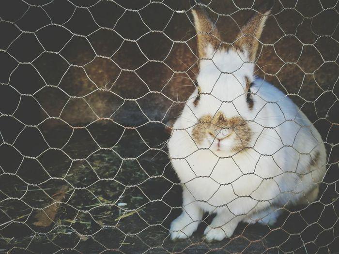 Full frame shot of a hare