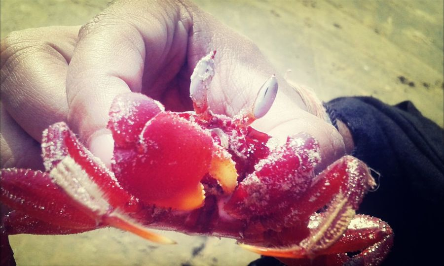 A new buddy.. Crab Sea Life EyeEm Nature Lover On The Beach
