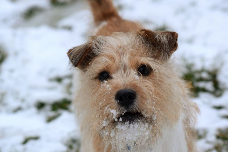 dogs It's A Dogs Life ❤ Snow ❄ Love Dogs Of EyeEm Dogs Jack Russell Dogs Of Winter Pets Water Portrait Snow Dog Looking At Camera Winter Beach Cute Nose Puppy Purebred Dog Paw Lap Dog Canine