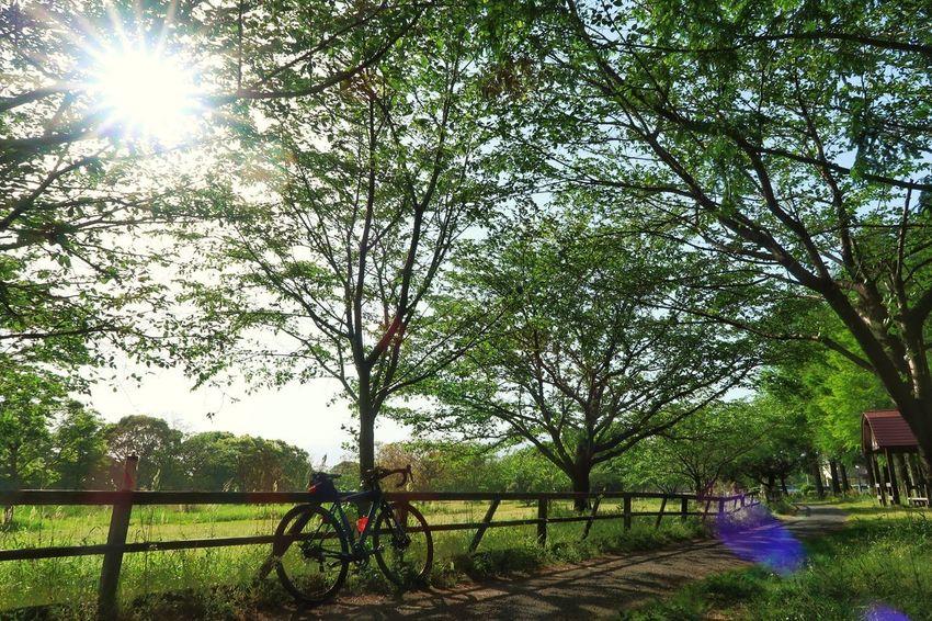 サイクリング ロードバイク 自転車 新緑 木 森 太陽 光 春 道路 林道 Cycling Bicycle Green Color Tree Forest Sun Sunbeam Spring Springtime EyeEm Nature Lover EyeEm Best Shots 写真好きな人と繋がりたい 写真撮ってる人と繋がりたい Beauty In Nature