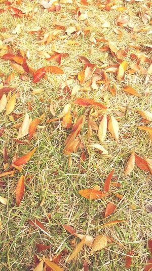하루가 다르게 가을 냄새가 진해집니다. (근디 왤케 듭지..;;)