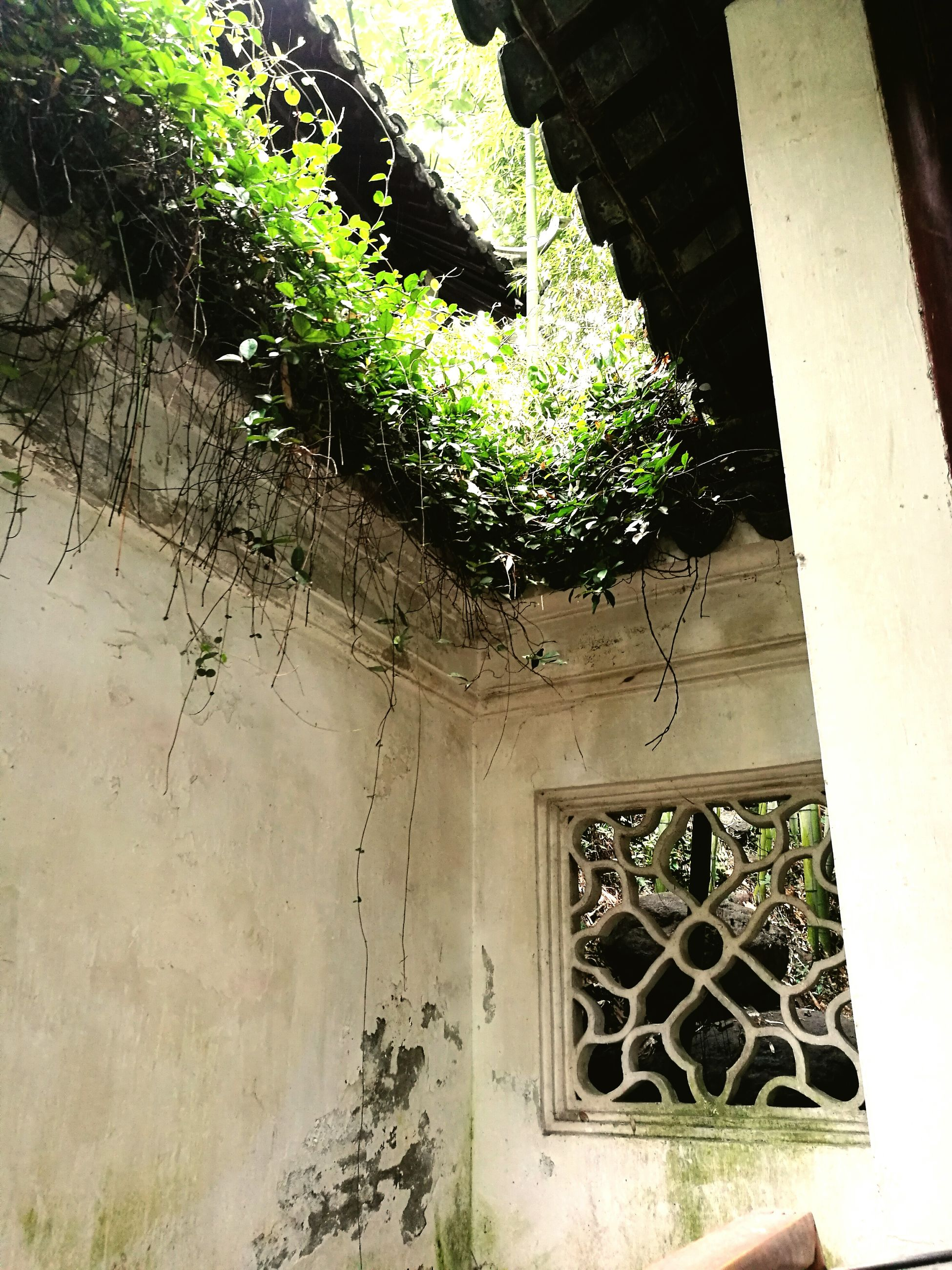 architecture, built structure, house, plant, building exterior, low angle view, growth, damaged, messy, day, growing, no people, weathered