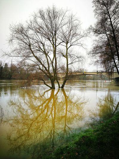 La Seine en Crue. Crue Crue2018 Water Reflection Lake Nature Day Outdoors Sky Tree No People Beauty In Nature