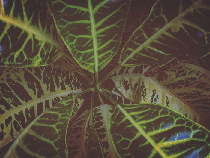 Leaf Green