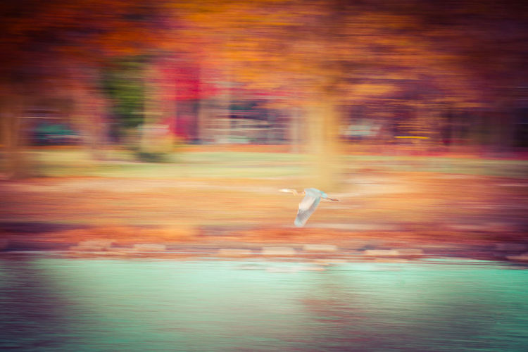 Blurred Motion Cranespotting Day Fall Beauty Fall Collection Flying Motion No People Outdoors Riverview Park, Pennsville NJ Speed