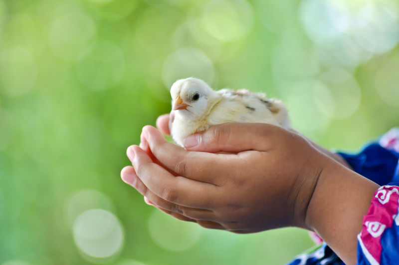 Close-up of hand holding bird against blurred background