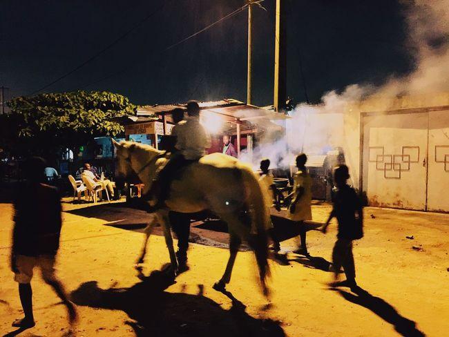 Abidjan Night Street Domestic Animals