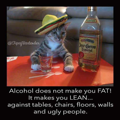 That's just what this cat wants u to think! Drinks Check This Out Taking Photos Cowboys Fan