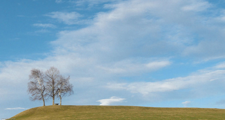 Trees in the Horizon in Zurich Oberland, Switzerland. Beauty In Nature Blue Grass Landscape Lone Nature No People Outdoors Scenics Sky Tranquility Tree The Great Outdoors - 2017 EyeEm Awards Perspectives On Nature