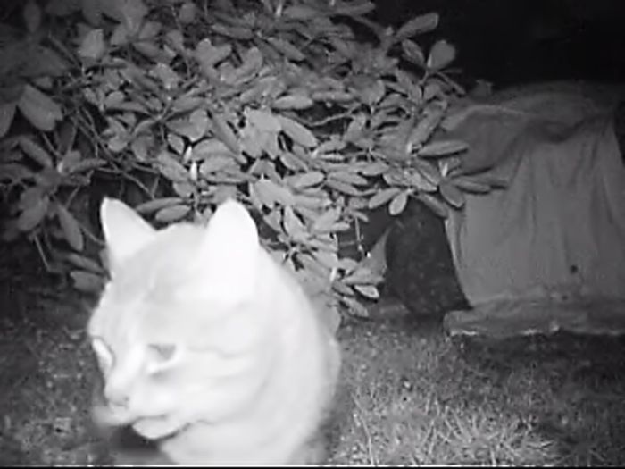 I tried to find my escaped cat with a night vision camera Night Vision Camera 🎥 Animal Animal Themes Black And White Cat Cats At Night Escaped Cat Find Cat Nature Night No People Outdoors Tabby Cat