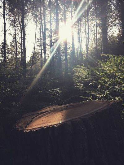 The Great Outdoors - 2017 EyeEm Awards Tree Vscocam Nature Sunlight Outdoors Forest No Filter