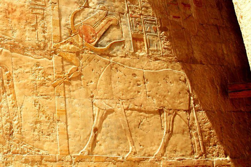 Temple Of Hatshepsut Cow Egypt