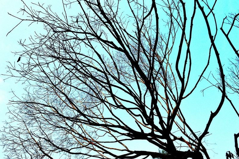 Autmn...! Differentfilter Prettyinteresting Learn & Shoot: Simplicity Awesome_nature_shots Tree And Sky Tree Branches Winter Trees Showcase: November Treegasmic Tuesday 😂😝😎