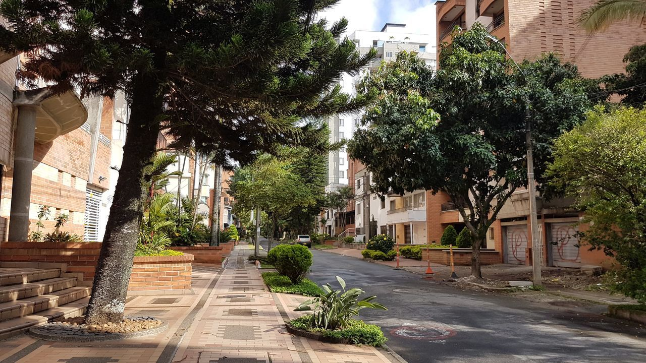 FOOTPATH AMIDST TREES AND BUILDINGS