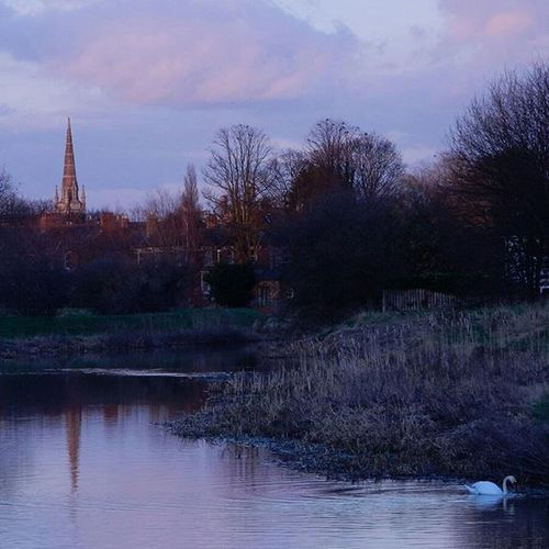 Evening on the Riverwitham with a lone Swan and Stcatherinescathedral Steeple www.facebook.com/melaniecycles Urbanphotography Photography Photos Lifethroughalens Cyclephotography Naturephotography Naturespeakstotheheart Waterreflections  Cycling Cycle Biketowork Commutebybike Wintercycling Urbancycling Naturecycling River Riverphotography Nikon_photography Nikons9900 Nikon evening eveninglight lincoln lincolnshire