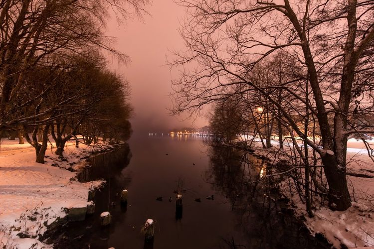 Tampere, foggy morning Tree Bare Tree Nature Water Reflection Beauty In Nature Tranquility Tranquil Scene Outdoors No People Scenics Cold Temperature Winter Sunset Branch Sky Animal Themes Day