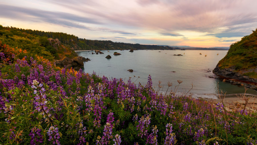 Scenic view of flowering plants on land against sky during sunset