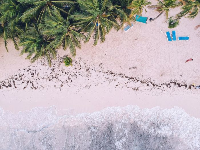 I pretend I fly. Summer Exploratorium Palm Trees Summer Sand Shoreline Waves Ocean Beach View Landscape From Above  Dronephotography Beach Colombia Tropical Climate Tropical Paradise Jungle Day Land Nature High Angle View Plant Sand No People Outdoors Beach Growth Sunlight Beauty In Nature Creativity The Great Outdoors - 2018 EyeEm Awards