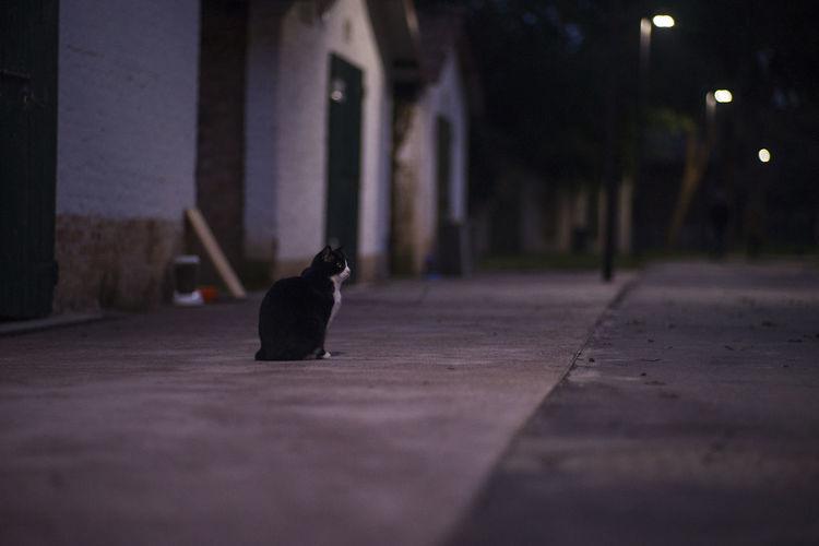 Cat sitting in a city