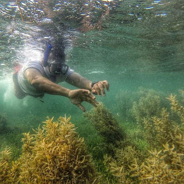 Padang Lamun Bintan Bintan  Documentary Seagrass Gopro Goprooftheday Wonderfulkepri  Sea Sealife Pewartafotoindonesia Pfikepri 1000kata SijoriImages Yuliseperi