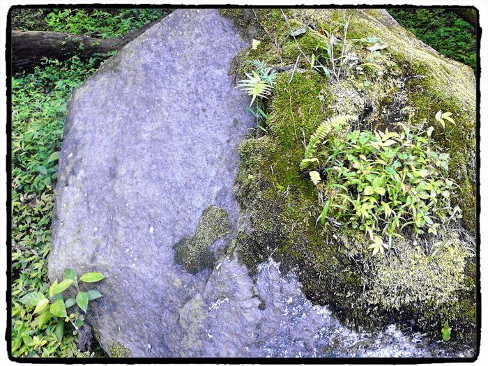 La vida sorprende Rocks Green Nature